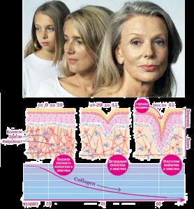 Недостаток коллагена у женщин в разном возрасте Омоложение кожи