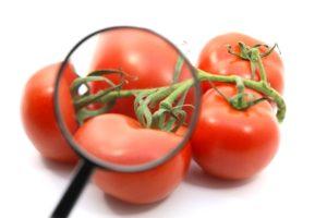 ликопин в помидорах и волшебные помидоры под микроскопом